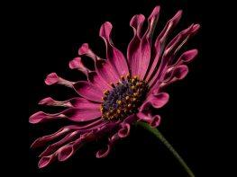 flower on black 8