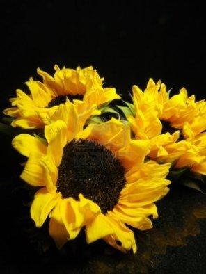 sunflower on black 2